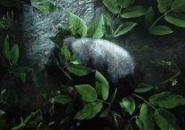 red dead redemption 2 opossum locations