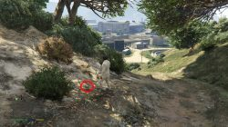 Grand Theft Auto 5 Zancudo Peyote Plant Location