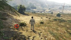 GTA 5 Grand Senora Desert 2 Peyote Plant Location