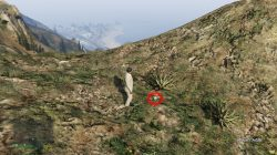 GTA 5 Mount Chiliad Peyote Plant Location
