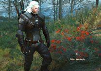 beggartick blossoms