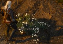 witcher 3 arenaria