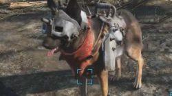 Dog helmet fallout 4