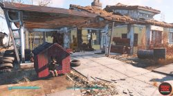 where to find dogmeat in settlement