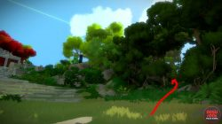 Finding Jungle Puzzles the witness