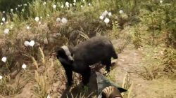 Far Cry Primal Animals Badger