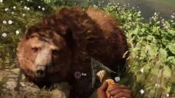 Far Cry Primal Animals Brown Bear