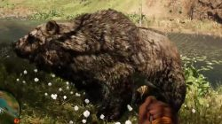 Far Cry Primal Animals Cave Bear