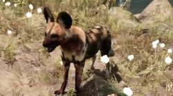 Far Cry Primal Animals Dhole