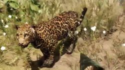 Far Cry Primal Animals Jaguar