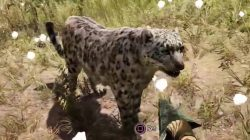 Far Cry Primal Animals Leopard