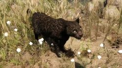 Far Cry Primal Animals Rare Black Jaguar