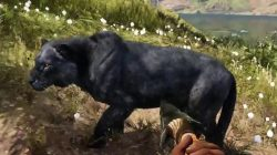 Far Cry Primal Animals Rare Black Lion