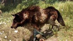 Far Cry Primal Animals Rare Stripe Wolf