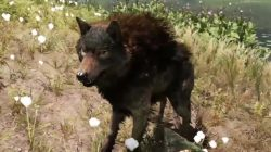 Far Cry Primal Animals Wolf