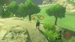 Best Wild Horses Locations Zelda Breath of the Wild