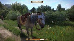horse head gear