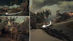Where to find Entwined Trees Sea of Thieves