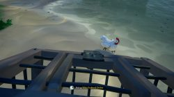 how to catch & find chickens sea of thieves