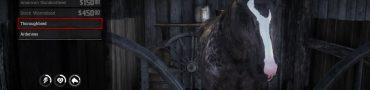 Red Dead Redemption 2 Dapple Black Thoroughbred Preorder Bonus Location