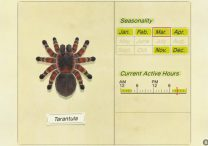 How to Catch Tarantula & Earn 8000 Bells in Animal Crossing New Horizons