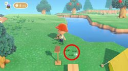 grow flowers how to animal crossing new horizons