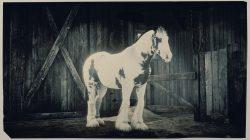 gypsy cob new horse coats rdr online