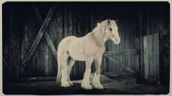 how to get gypsy cob new red dead online horse
