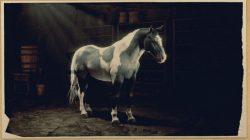 norfolk roadster horse rdr2 online