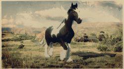 rdr online gypsy cob new horse coats