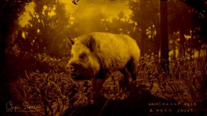 red dead online legendary boar cogi wakpa icahi