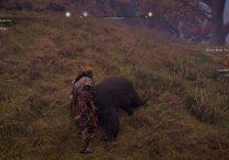 ac valhalla black bear