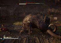 black stout legendary animal ac valhalla dlc wrath of the druids