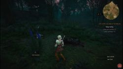 Quest Ciri's Story: The King of the Wolves image 273 thumbnail